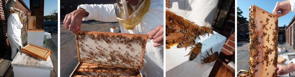 Removing honey-filled frames for extraction