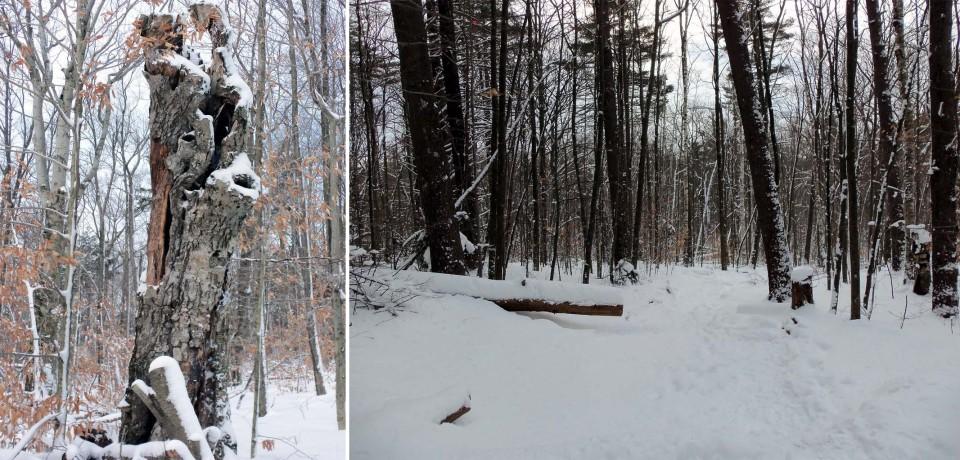 Monadnock woods