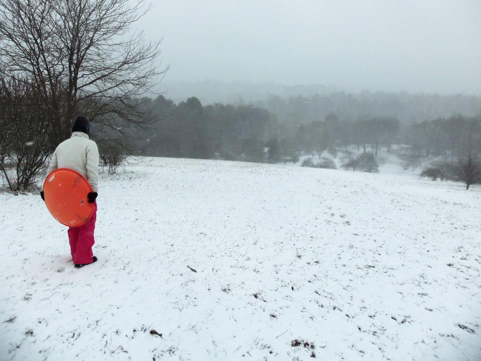 Peters Hill, Arnold Arboretum